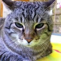 「ネコ向けのモバイルユーザビリティ: ネコ科のために不可欠なデザイン原則」の記事画像