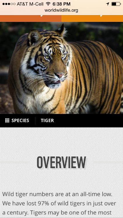 WWF: このモバイルページでは、異なるページセクション同士を連ねて表示しており、モバイルユーザーはページ内にどんな種類のコンテンツがあるのかを知るすべがなかった。たとえば、トラがさらされている脅威についての記述や寄付のためのリンクがそのページにあるというのは、熱心にページ最下部までスクロールダウンしない限りはわからなかっただろう。しかし、最初にあるOverview(:概要)セクションから、スクロールダウンをし、そうした情報を探そうという気にはならない。