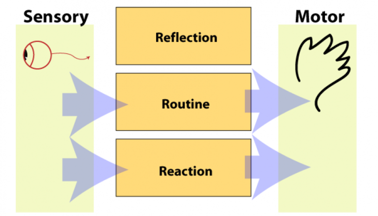 Figure 1. The Three Level model